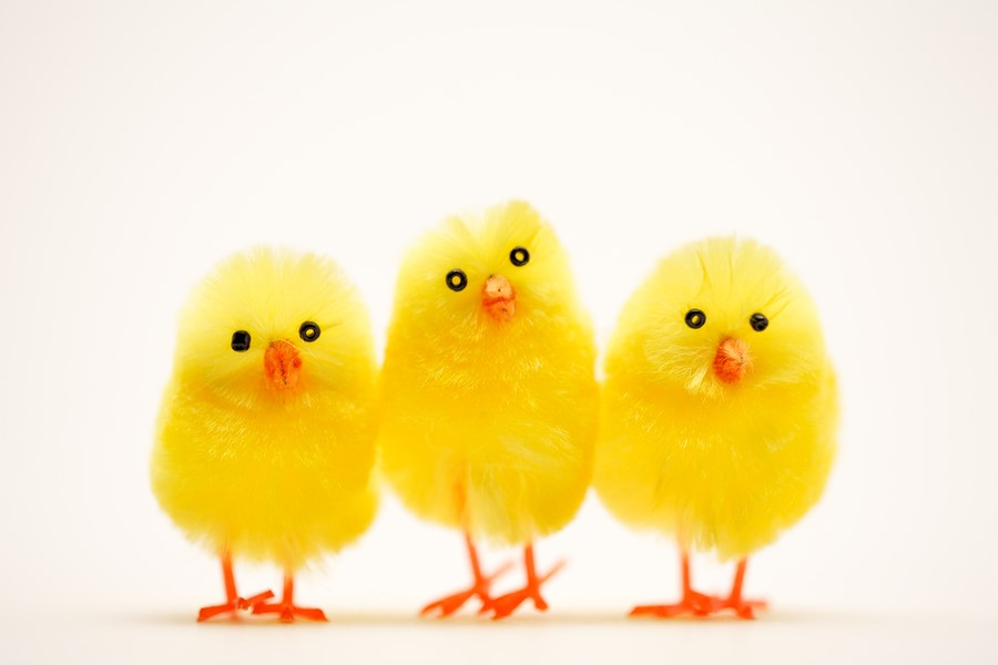 Easter_Chicks.jpg
